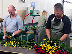 Workers in a greenhouse